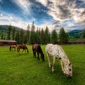 Horses On An Evening Meadow iPad Wallpaper