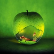 apple-fishbowl