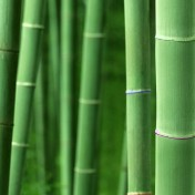 Bamboo Forrest iPad Wallpaper