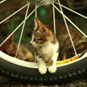 Bike Kitten iPad Wallpaper