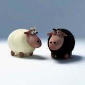 Black Sheep iPad Wallpaper