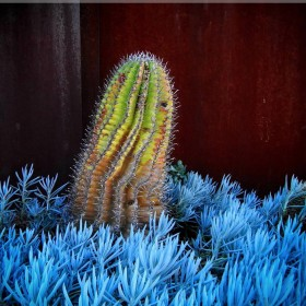 Cactus iPad Wallpaper