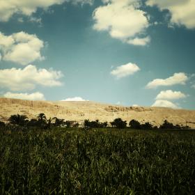 Egyptian Field iPad Wallpaper