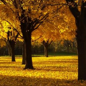 Golden Leaves iPad Wallpaper