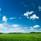 grassy-field-4