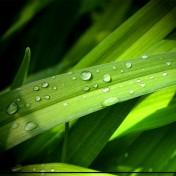 Green Grass iPad Wallpaper