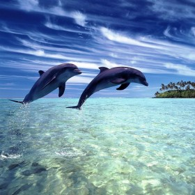 Jumping Dolphins iPad Wallpaper