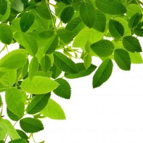 Leaves iPad Wallpaper