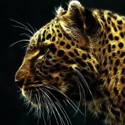 Leopard iPad Wallpaper