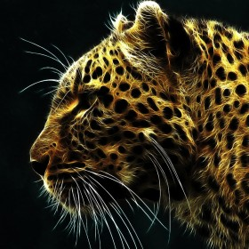 Leopard iPad Wallpaper