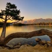 Lonely Tree iPad Wallpaper