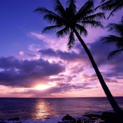 Palm Tree At Sunset iPad Wallpaper