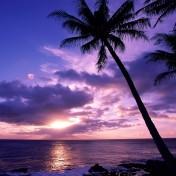 palm-tree-at-sunset