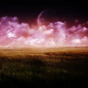 Purple Field iPad Wallpaper