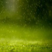 Rainy Grass iPad Wallpaper