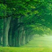 Row of Trees iPad Wallpaper