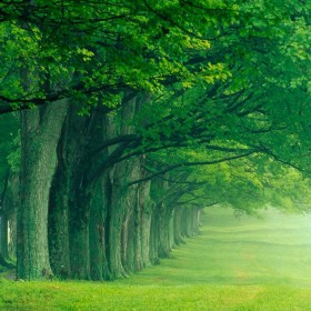 Row of Trees iPad Wallpaper