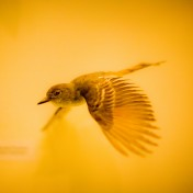 Humming Bird iPad Wallpaper