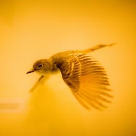 Humming Bird iPad Wallpaper