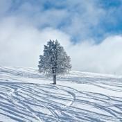 Snowey Tree iPad Wallpaper